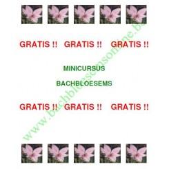 Gratis Minicursus Bachbloesems