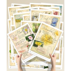 Bach Flower Posters Complete Set van 38 (A4)