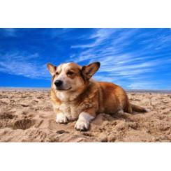 Online Opleiding Bachbloesemadviseur voor Dieren