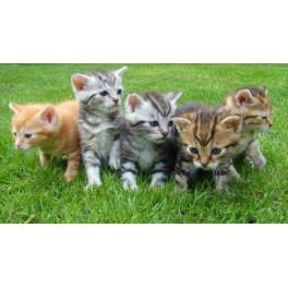 Online Thuiscursus Bachbloesems voor Dieren