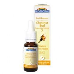 Chestnut Bud 20 ml.
