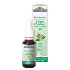 Sweet Chestnut 20 ml.