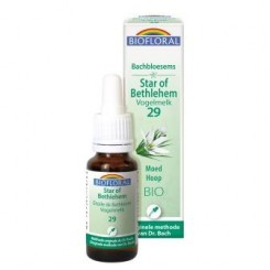 Star of Bethlehem 20 ml.